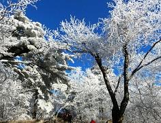 冬天,不需要玫瑰_1A