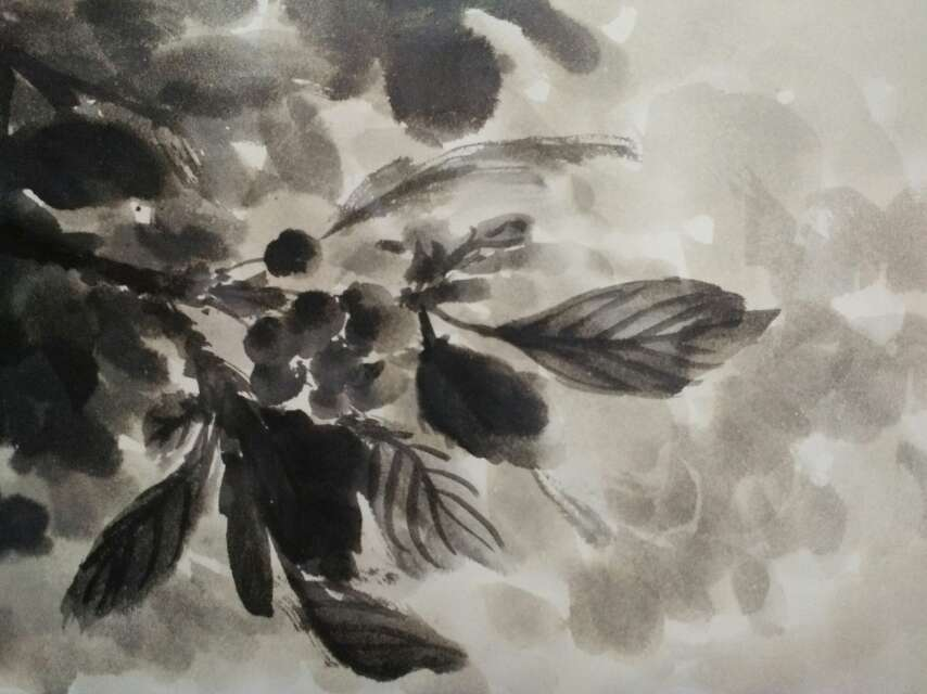 樱桃:五一节雨中写生