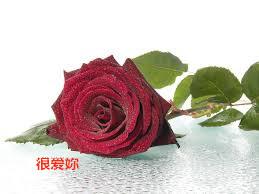 白莲玫瑰喇叭花2_副本